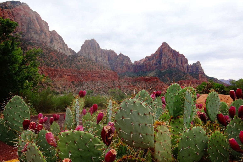Quels sont les plus beaux sentiers de randonnée dans le parc national de Zion ?